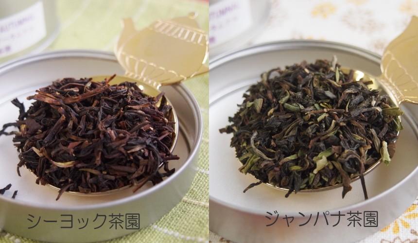 オータムナル茶葉の違い