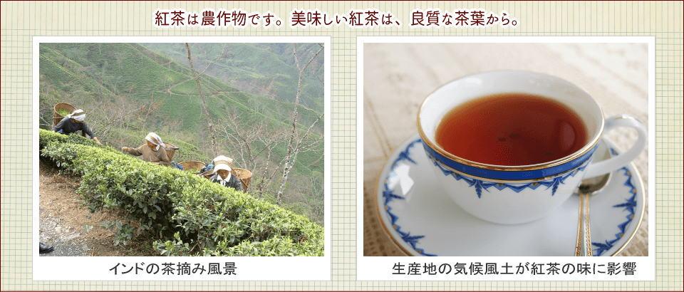 紅茶通販ティークラブが選ばれる3つの理由